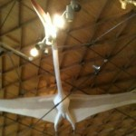 Pterosaur, Museum of the Big Bend, Alpine